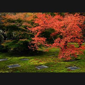 秋色へ・・・