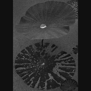 花蓮の世界(モノクロ編)2