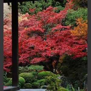 寺の秋景 1