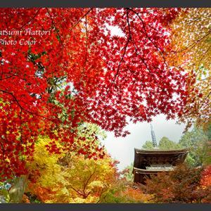 寺の秋景 2