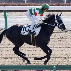 乗馬【16鞍目】/プルミエロールは20日の阪神競馬へ