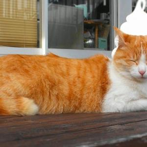 道の駅の看板猫?