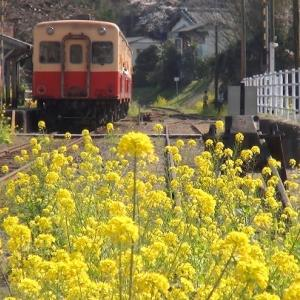 菜の花 小湊鉄道 (千葉県市原市) 2020年3月