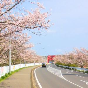 高滝湖 桜 (千葉県市原市) 2020年4月3日