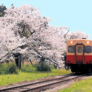 高滝駅(小湊鉄道)の桜