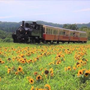 小湊鉄道と小さなひまわり畑
