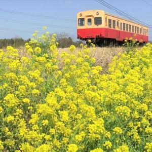 菜の花と小湊鉄道