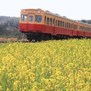 石神 菜の花畑 小湊鉄道 2021年3月18日 (千葉県市原市)