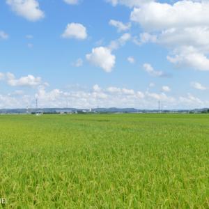 緑色に染まる広大な田園風景 千葉県袖ケ浦市 2021年7月29日