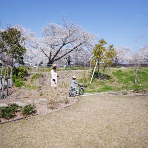 *クタクタのお花見。と、4歳と1歳2か月の平日ごはん。*