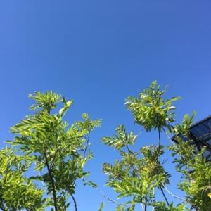 Perfect  sky