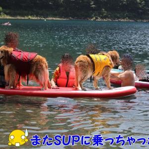 本栖湖SUP③