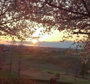 桜の季節が・・・