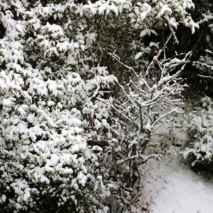 今日のWebサイト作成業務・松島は雪景色です