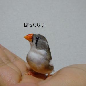 鳥瞼の考察