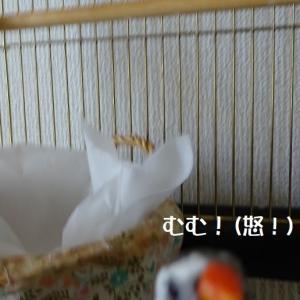 小鳥の本気