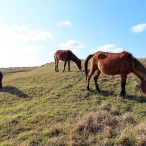 ANAカード35周年キャンペーンで想定外の9000マイル。馬に乗りたい