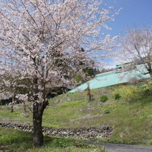 桜とタンポポとアイツ....のはなし