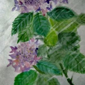雨中の紫陽花