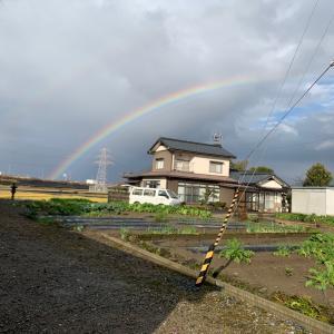 雨あられのち虹