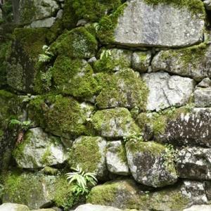 「石の声を聴き、石の行きたい所へ持っていけ」—— 石積み・穴太衆に伝わる仕事の極意