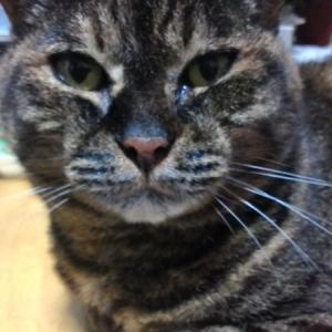 我が家の愛猫「とら子」逝く