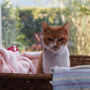 メル姫ちゃん、籠のベッドで介護生活をたのしむ