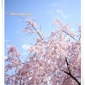 桜と青空のコントラストをイメージしたゴシック体のカリグラフィー作品作り