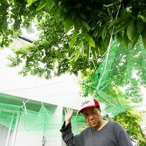 中京ドリームの名古屋校は自然に溢れ、梅の収穫も近し!ネットを妻と張り万全です!(通信制高校サポート校中京ドリーム)