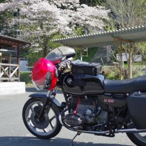 R80と桜