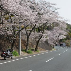 R80 桜ツーリング