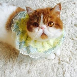 猫用スタイ♡
