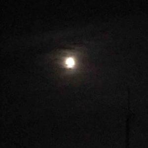 月食とメダカ