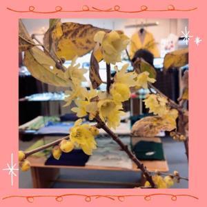 蝋梅が咲いています