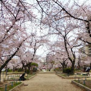 土佐稲荷神社の桜2020年