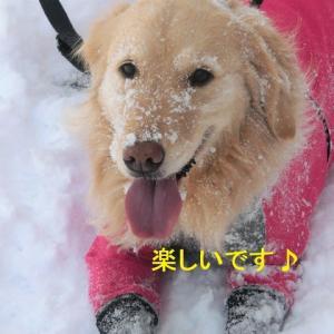 雪で遊んだら昼ご飯