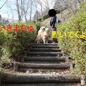 公園散歩での反省点