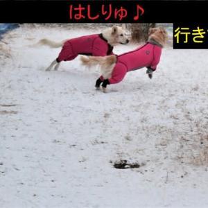 ちょっぴり積雪
