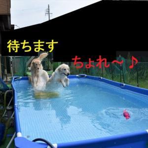 プールに慣れ過ぎて・・・?