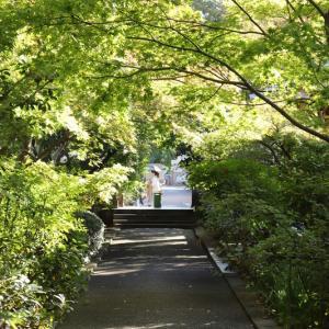 伊興町にある禅寺「薬師寺」。