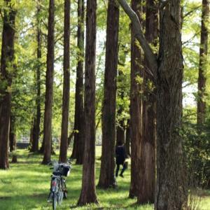 葛飾区水元公園深まる秋。