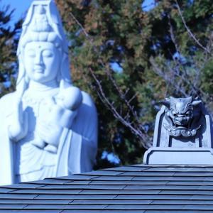 足立区扇橋大橋界隈の吉祥寺に「咲く梅」。
