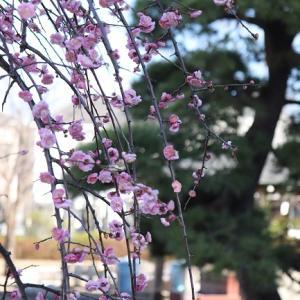春一番が吹き荒れた東京足立区春が来ても~。