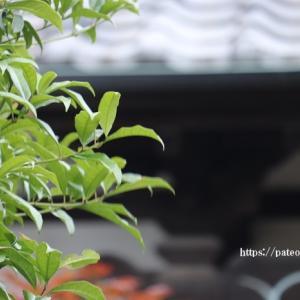 続)足立区保木間に建つ阿弥陀院を撮る。
