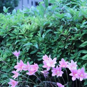 月歴卯月、色とりどりの花が美しい時?