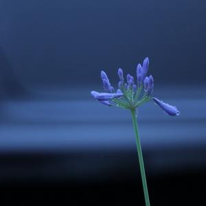 夏至、朝から小雨に濡れる花ばな?