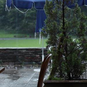 みどり美しい昭和記念公園も1時間の散策で雷と降る雨に?