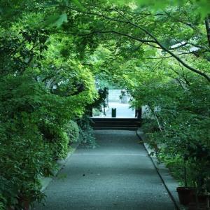 足立区薬師寺の緑み一色も心打つ!