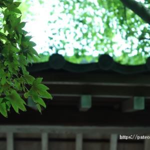 足立区薬師寺へ再訪してみれば秋緑?