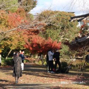 東本願寺別邸の渉成園を訪ねて。その3。